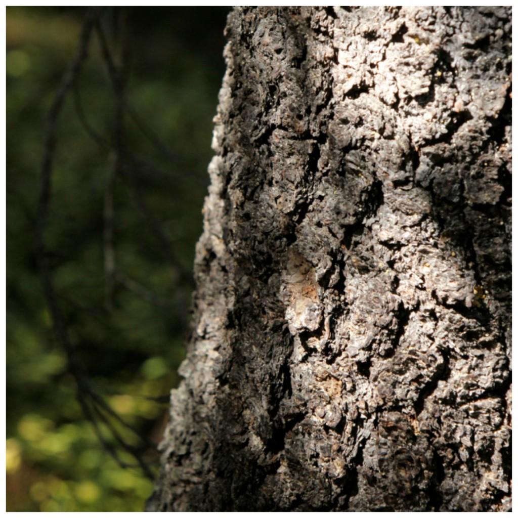 2012-3-19 - Bowen Tree