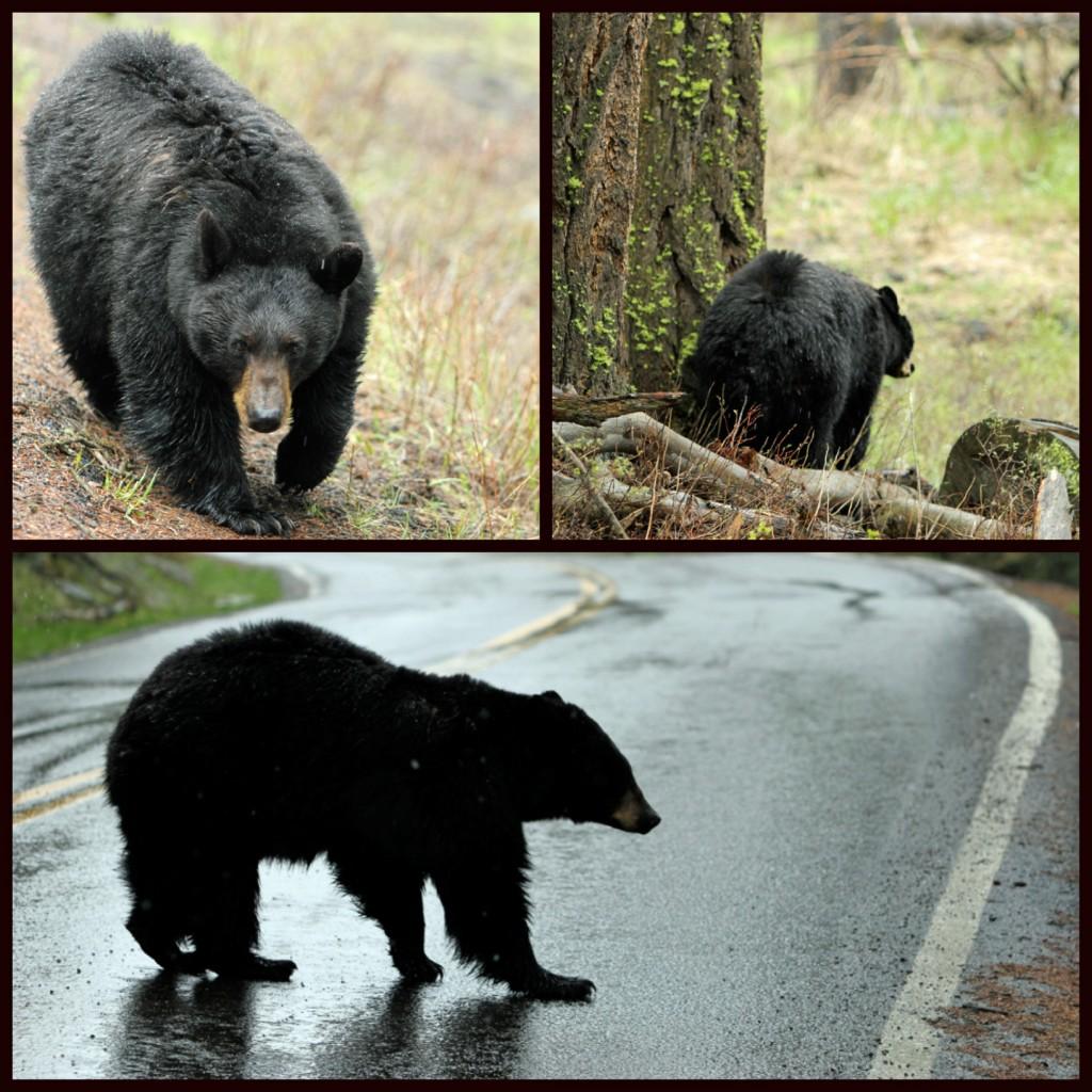 2012-3-22 - Bears