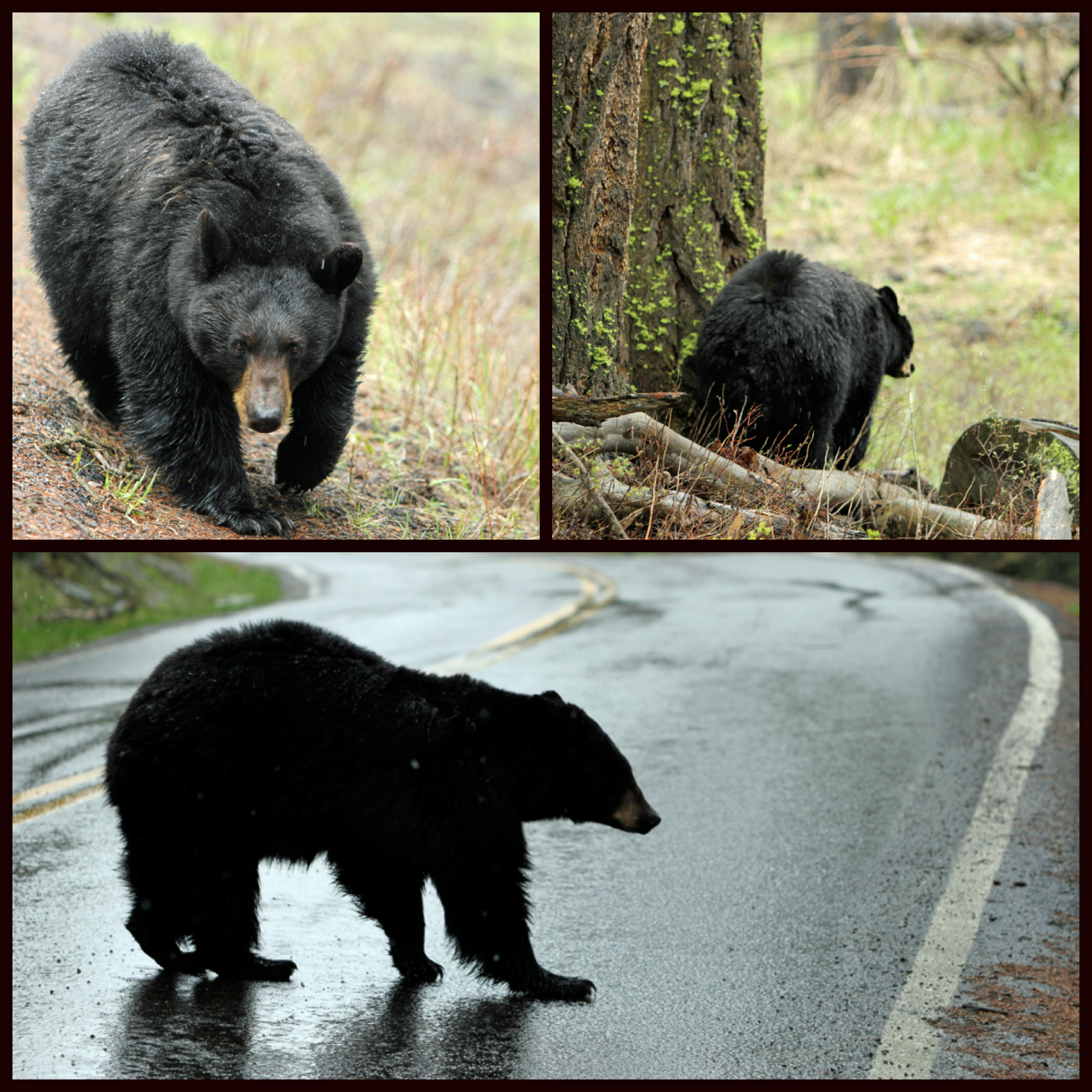 2012-3-22 - Bears