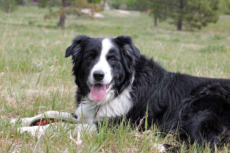 2012-4-29 - Sadie