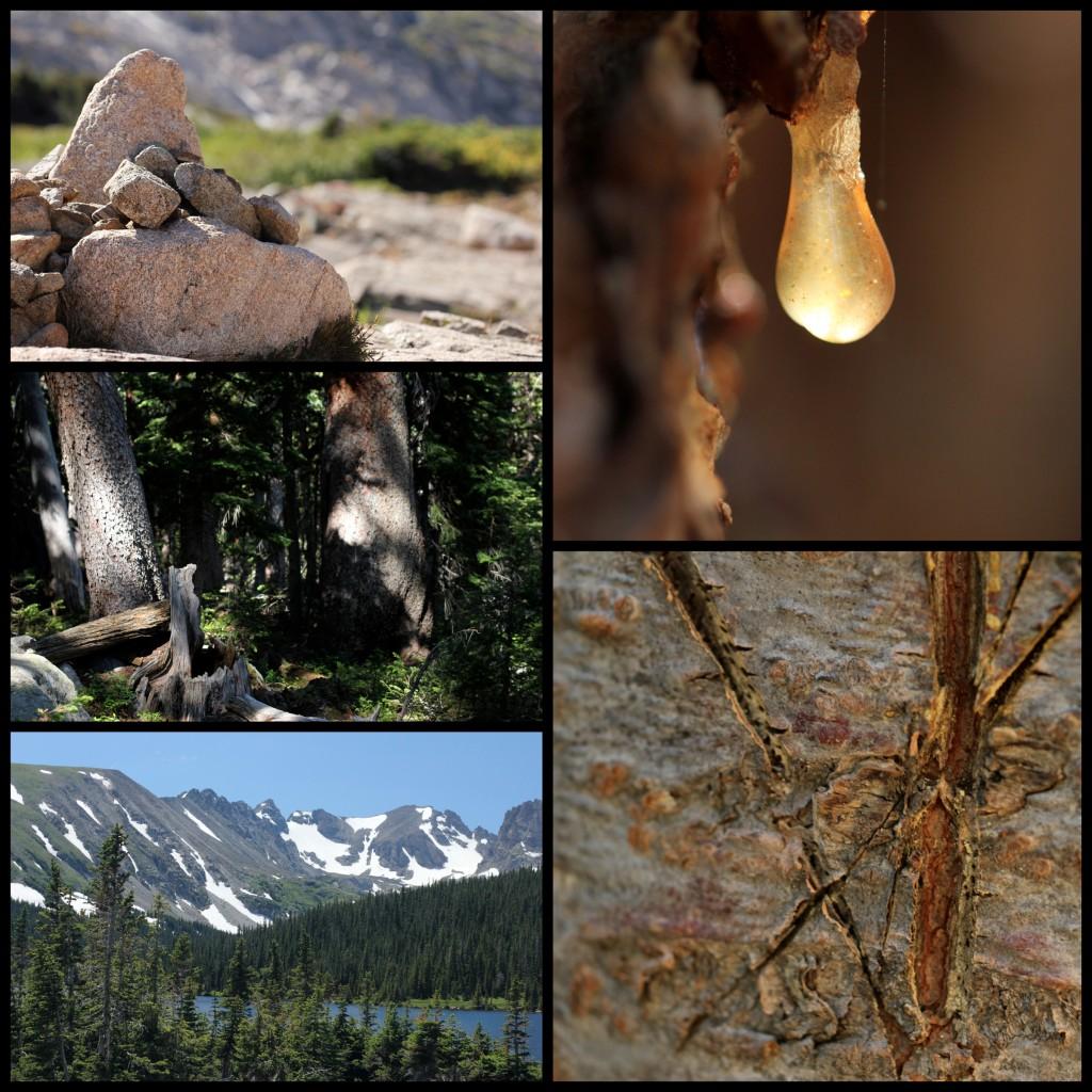 2012 6 25 - brainard collage