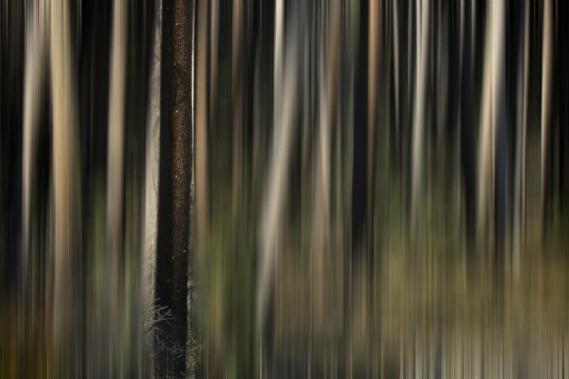 2014 1 3 - Boneyard Bowen - vignette I - Motion Blur2 - Web Size - IMG_0595
